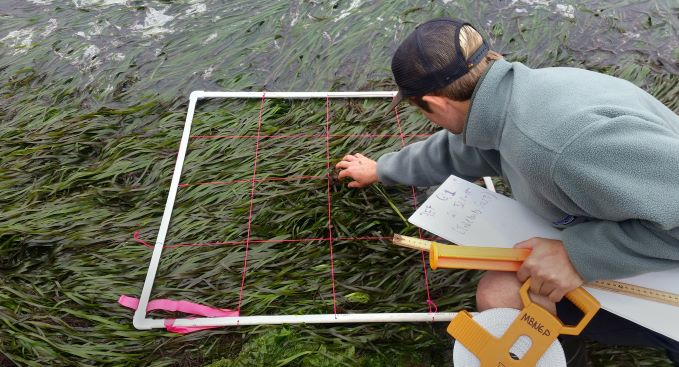 Eelgrass Expansion in the Morro Bay Estuary, CA (2019)