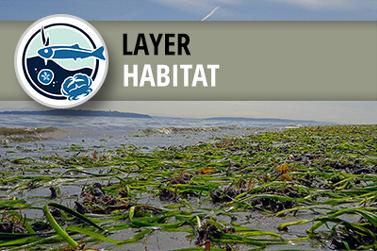 West Coast USA Eelgrass (Zostera sp.) Habitat